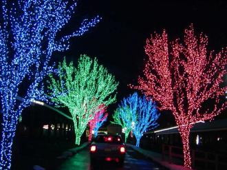 Holiday-Lights-Trees